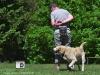 rallydogdance0618
